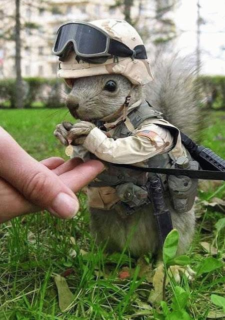 Command Squirrel